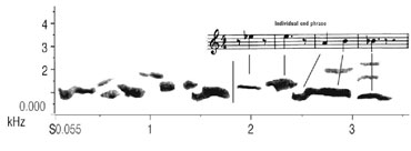 music-style notation