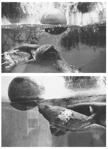 photos of turtles playing