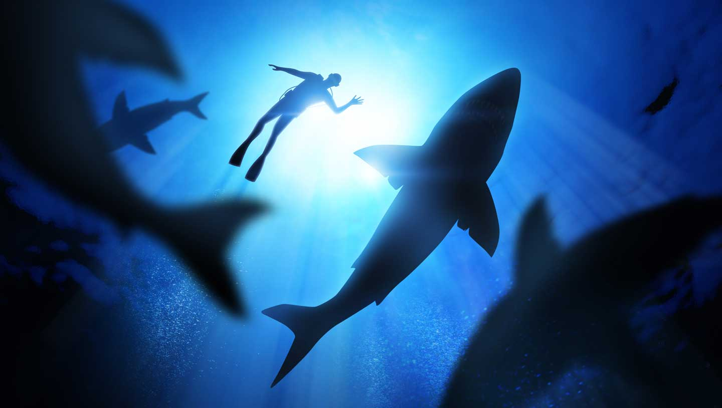 undersea view of man and sharks