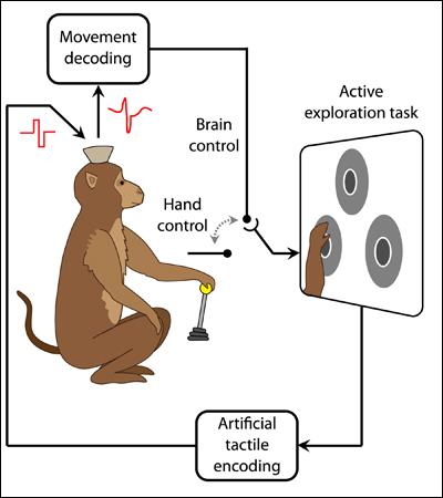 cartoon of monkey and device