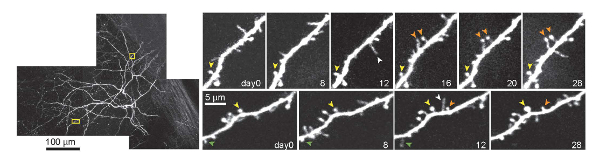 sequence of microscope photos