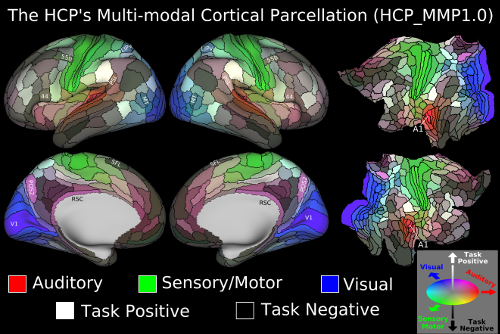 brain-scan reconstructions