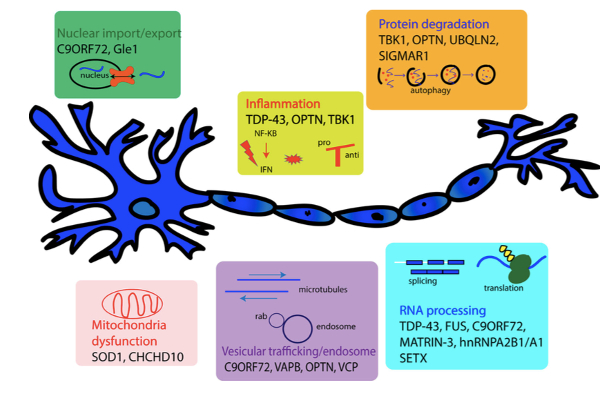 cartoon neuron with boxed info