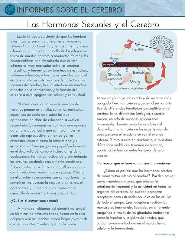 Sex Hormones and the Brain (Spanish)