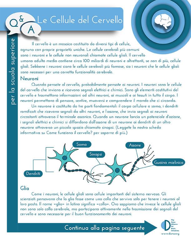 Cells of the Brain, Grades 9-12 (Italian)