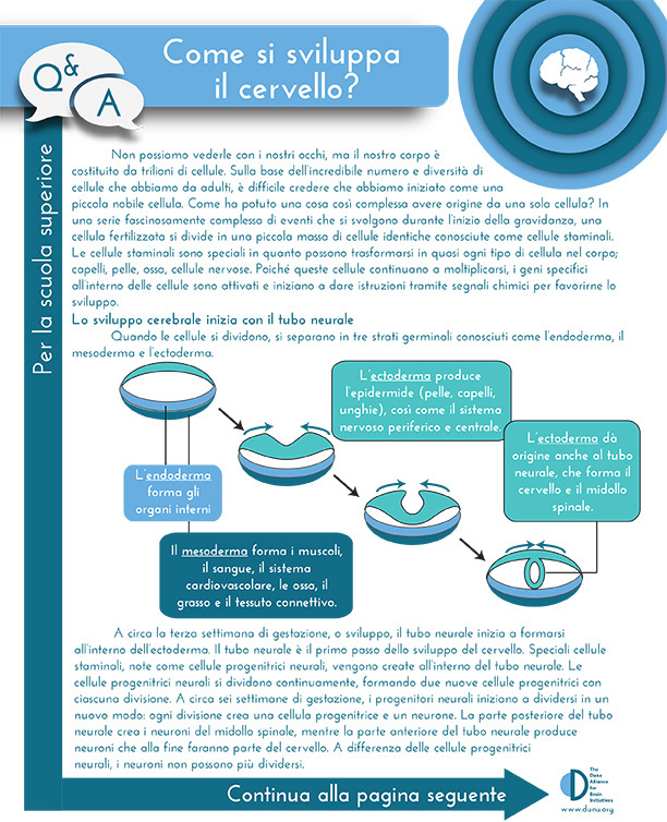 How Does the Brain Develop? Grades 9-12 (Italian)
