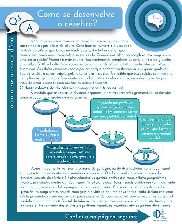 How Does the Brain Develop? Grades 9-12 (Portuguese)