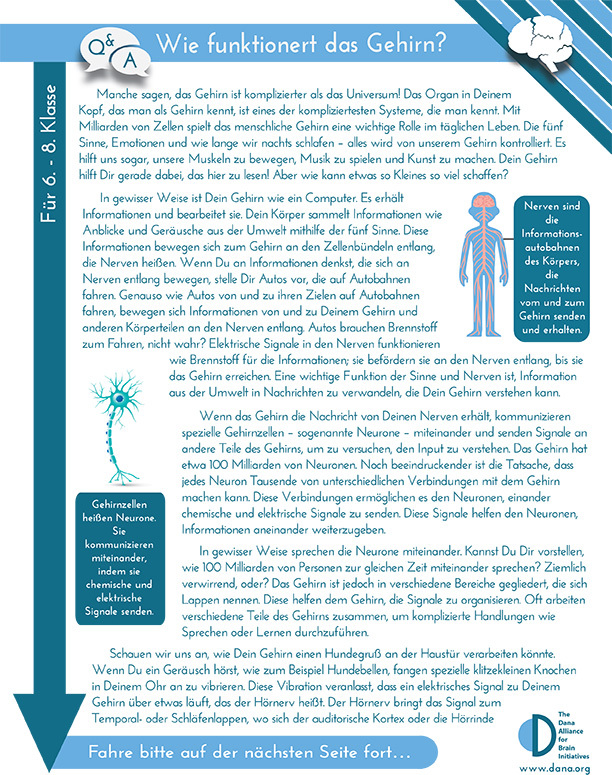 How Does the Brain Work? Grades 6-8 (German)