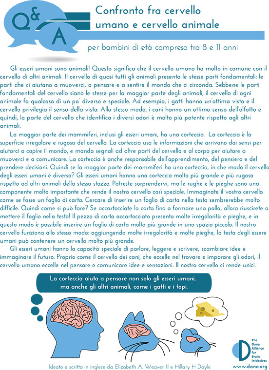 Human & Animal Brains: How do they Compare? Grades 3-5 (Italian)