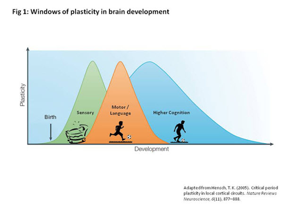 Cerebrum - The Brain's Emotional Development - figure1 - cont