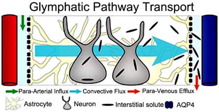 cartoon showing transport pathway
