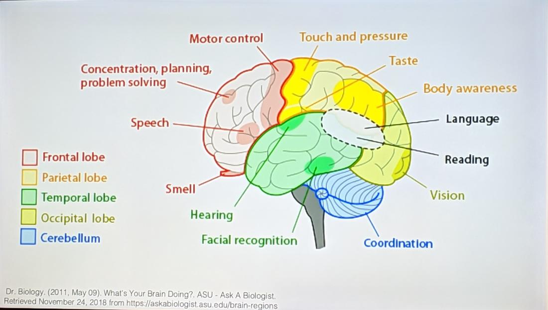 Epilepsy_Brain_Regions