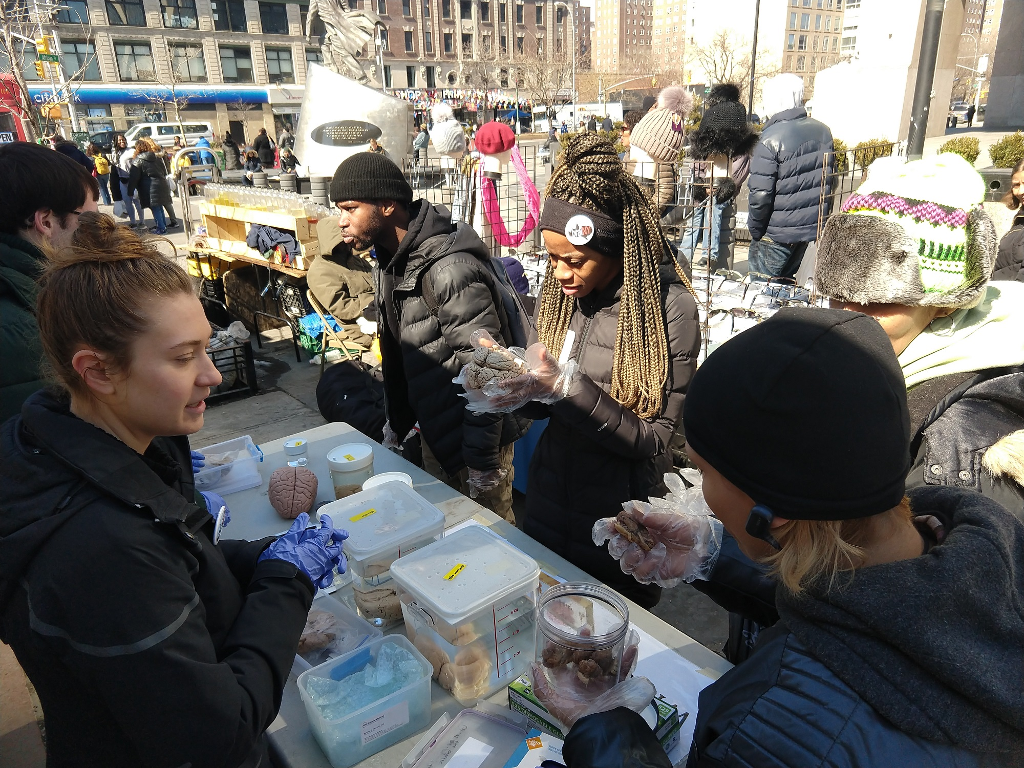 Science enthusiasts handling human and sheep brains