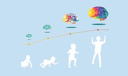 scale-of-brain-development