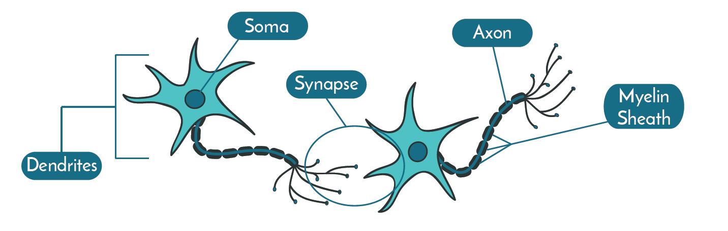Labeled-neurons-basics