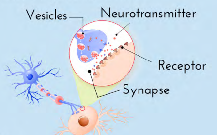 neurotransmitter-short-cartoon