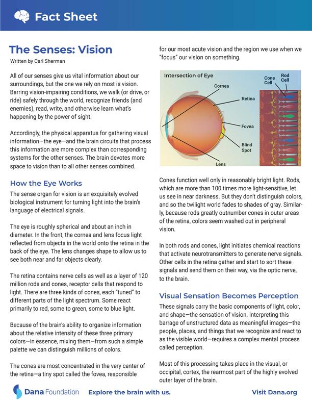 Senses: Vision